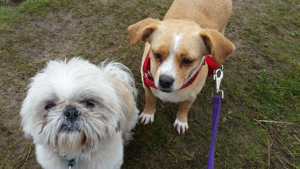 Why Choose Go Walkies Pet Services